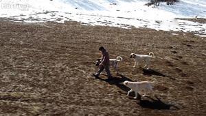 Tokatlı çoban, arazide bulduğu gök taşlarına 200 bin dolar istiyor
