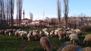 Haymana'da 73 mahalle artık 'kırsal'