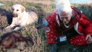 Bunu yapan insan olamaz Edirnede vahşet: 8 yavru köpek yakılarak öldürüldü