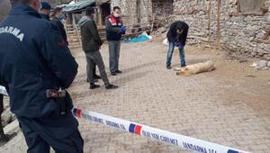 Köy meydanında öldürülen köpek için inceleme