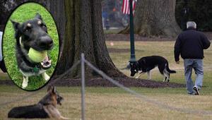 Bidena köpek şoku: Çalışanları ısırdı, saraydan kovuldu