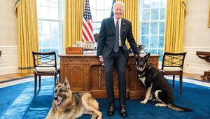 Çalışanı ısıran köpeklerini eve gönderdi