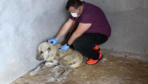 Hasta köpek korumaya alındı