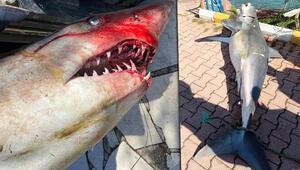 Antalyada şaşkına çeviren görüntü Köpek balığı ölüsü sahile vurdu