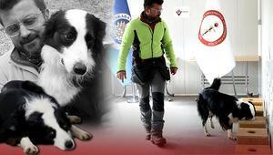 Ankara Üniversitesi ve TÜBİTAK öncülüğünde  kovid-19u teşhis eden dedektör köpek yetiştirildi