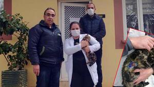 Kediye işkence yapan cani gözaltına alındı