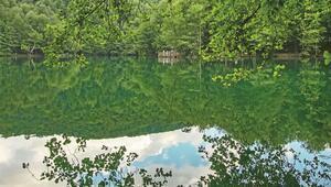 Ormanda güzel bir gün...