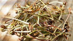 Kiraz sapı çayı nasıl yapılır İşte kiraz sapı çayının faydaları