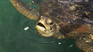 Madagaskarda inanılmaz olay: Deniz kaplumbağası yiyip öldüler