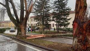 Meclis bahçesindeki ağaca yıldırım düştü