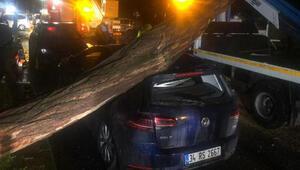 Şiddetli yağışa dayanamayan ağaç park halindeki otomobilin üzerine devrildi