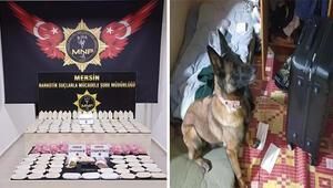 Valiz ve çantadaki yüklü miktardaki uyuşturucuyu narkotik köpeği Mila buldu