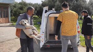 Bursada işkence yapılan köpek, tedavi edildi
