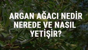 Argan Ağacı Nedir, Nerede Ve Nasıl Yetişir Argan Ağacı Özellikleri, Bakımı Ve Faydaları Hakkında Bilgi