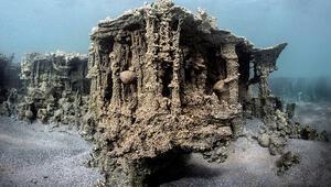 Vanda önemli keşif Küçük mercan olduğu belirlendi... Mucize gibi bir şey