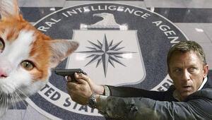 CIAin casus kedi projesi yıllar sonra deşifre oldu
