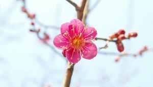 Nisan ayı ile ilgili sözler… Ünlü şairlerimizin ilkbahar şiirleri