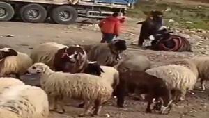 Eşeğini döven çobana bin 33 TL para cezası