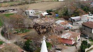 35 yıldır cami minaresine yuva kuran leylekler köyün simgesi oldu
