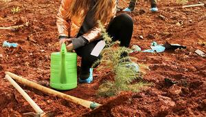 TMMB'den Türkiye'de 30'uncu yıl 'Hatıra Ormanı'