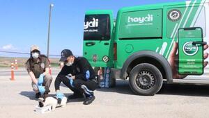 Adıyamanda polisler sokak hayvanlarını besledi