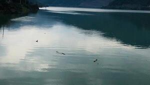 İSKİ açıkladı İşte İstanbul barajlarındaki son durum...