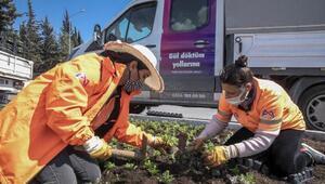 Büyükşehir, baharla birlikte 60 bin mevsimlik bitki dikti