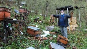 Boz ayı bahçeye girdi 30 kovanı parçaladı