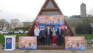 Trabzonda sokak hayvanlarına özel ilgi