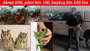 İnternet üzerinden hayvan satışına tepki