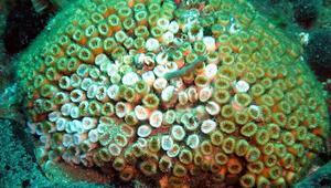 Denizlerdeki tehlike korkutucu düzeye doğru gidiyor