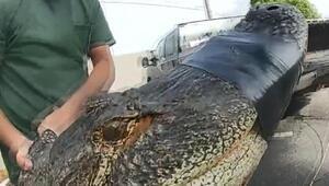 ABD'de bir apartmanın otoparkında 3 metrelik timsah yakalandı