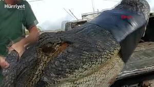 ABDde bir apartmanın otoparkında 3 metrelik timsah yakalandı