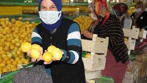 Talep azalınca limon fiyatları da düşüşe geçti