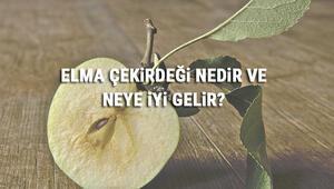 Elma Çekirdeği Nedir Ve Neye İyi Gelir Elma Çekirdeği Faydaları