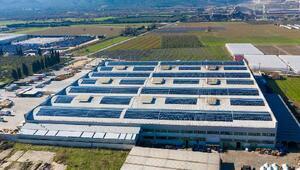 CW Enerji, Güngör Zeytincilik çatısına GES santrali kurdu