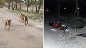 Damar yolu açık halde ölü bulunan 30 köpek için suç duyurusu