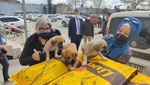 Edirne Valiliği'nden sokak hayvanları için 3 ton mama desteği