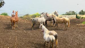 İstanbul'un atlarına Altındağ talip oldu