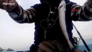 Zehirli trakonya balığına karşı ayakkabı giyin uyarısı
