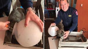 Başı plastik kavanoza sıkışan yavru köpeği itfaiye kurtardı