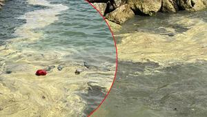 Mersinde deniz üstündeki sarı tabakanın sebebi belli oldu