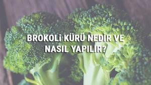 Brokoli Kürü Nedir Ve Nasıl Yapılır Brokoli Kürü Faydaları Ve Tarifi