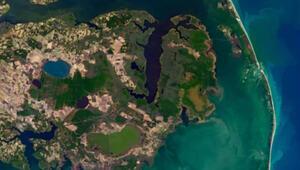 NASA yayınladı: Hayalet orman uzaydan görüntülendi