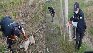 Yaralı köpeği veterinere HAYDİ polisleri yetiştirdi