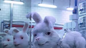 Save Ralph filmiyle gündeme geldi Hayvan deneyi yapmayan kozmetik markaları nasıl anlaşılır