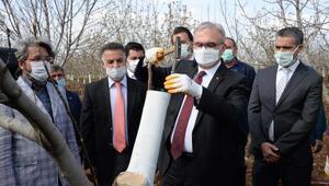 Diyarbakırda, 10 bin ceviz ağacı aşılandı