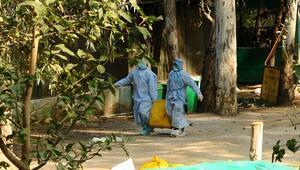Güney Afrikadaki kuş gribi salgını sonrası 3 ülke alarma geçti