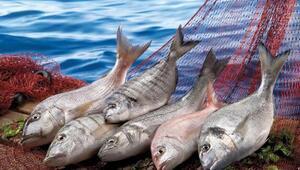Su ürünleri ve hayvansal mamuller sektörü ihracatta 2.5 milyar doları geçti