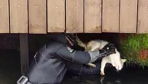 Beylerbeyinde iskele altına sıkışan kedi kurtarıldı